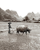 CHINA, Guilin, portrait of a farmer ploughing field with his water buffalo in rural Guilin (B&W)
