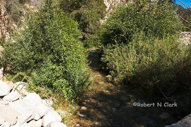 Bear Creek in the San Bernardino Mountains