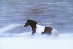 Horse, Methow Valley, Washington
