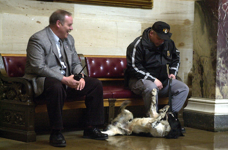 1dog031501 -- A Capitol Police dog named Sammy, fools around with Technician Michael Rodwill, during a break during security sweeps at the annual St. Patrick's Day Luncheon, in the Capitol.