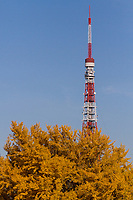 Tokyo Tower above the autumn foliage of a tree in Aazabu, Tokyo, Japan Friday December 2nd 2016