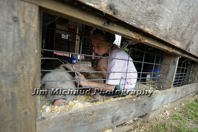 Kylie Bowmen, 11, of Tolland, works cleaning the ear of her six-month-old pig Wilbur, during the first day of the 70th annual Tolland County 4H Fair, Friday, August 10, 2012, at the Tolland County Agricultural Center in Vernon. (Jim Michaud/Journal Inquirer)