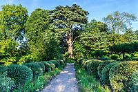 France, Loir-et-Cher (41), Cheverny, château de Cheverny, le Jardin des apprentis, allée bordée de boules de houx panachés et saules à feuilles de romarin et cèdre du Liban (vers 1870)