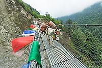 Carrying fuel supplies out of Lukla, Khumbu, Nepal