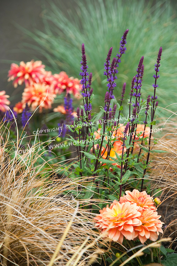 Dahlias, salvia and ornamental grass create visual and textural contrast.