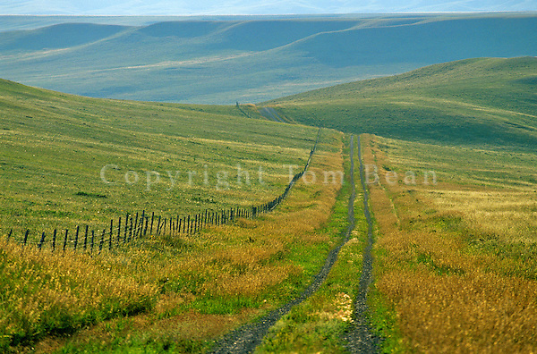 Country Road and fenceline on the Great Plains, Teton County, Montana, AGPix_0376.