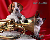 Xavier, ANIMALS, REALISTISCHE TIERE, ANIMALES REALISTICOS, dogs, photos+++++,SPCHDOGS1044,#a#, EVERYDAY