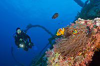 Scuba Diver at Numidia Wreck, Brother Islands, Egypt, Red Sea, Indian Ocean, MR