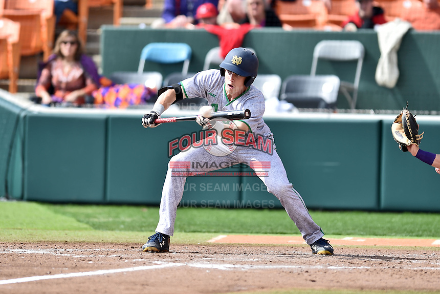 Notre Dame Fighting Irish right fielder Robert Youngdahl (25) squares to bunt during a game against the Clemson Tigers during game one of a double headers at Doug Kingsmore Stadium March 14, 2015 in Clemson, South Carolina. The Tigers defeated the Fighting Irish 6-1. (Tony Farlow/Four Seam Images)