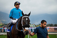 ARCADIA, CA - FEBRUARY 04: St Joe Bay #3, with Kent Desormeaux wins the Palos Verdes Stakes at Santa Anita Park on February 4, 2017 in Arcadia, California. (Photo by Alex Evers/Eclipse Sportswire/Getty Images)