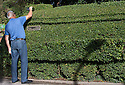 11/09/16<br /> <br /> A hedge in Nottinghamshire has been crafted into a one third scale replica model of the Mallard. The living masterpiece clipped into a privet hedge is 7ft tall and 42 ft long. <br /> <br /> &quot;The shape of the hedge just lent itself to being cut into a train&quot; said 72 year old Brian Childs, a retired AA controller and steam enthusiast who has taken the last three years perfecting his topiary creation alongside his bungalow in Morkinshire Lane, Cotgrave.<br /> <br /> &quot;Mallard broke the world steam record only 20 minutes from here in 1938 so that was the obvious choice.<br /> <br /> &quot;I have dodgy knees and cannot climb ladders so I didn't want it to be too high - I'm 6'4&quot; and can just reach the top of the train.<br /> <br /> &quot;I trim it for a couple of hours every other day from Spring to Autumn. The front still needs to 'grow' a bit more so I can add one more wheel.<br /> <br /> &quot;I've even included a footplate so a young lad from across the road can pretend he's the train driver. He thinks my blue shed is the ticket office.<br /> <br /> <br /> All Rights Reserved, F Stop Press Ltd. +44 (0)1773 550665