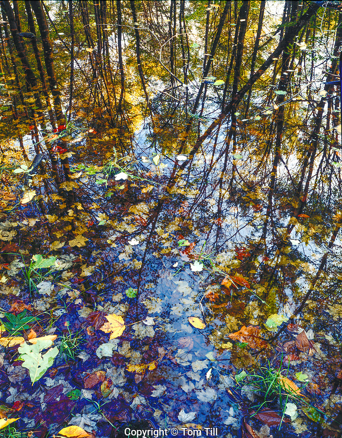 Swamp reflections, Great Swamp National Wildlfie Refuge, New Jersey