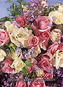 Interlitho-Helga, EASTER, OSTERN, PASCUA, photos+++++,pink + yellow roses,KL16522,#e#, EVERYDAY