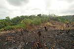 Burned forests, cleared for crops, along the Guatemalan coast
