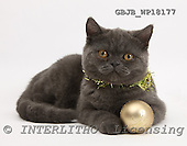 Kim, CHRISTMAS ANIMALS, photos, GBJBWP18177,#XA# stickers