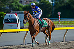 FUCHU,JAPAN-JUN 16: Wide Pharaoh, ridden by Yuichi Fukunaga, after winning the Unicorn Stakes at Tokyo Racecourse on June 16,2019 in Fuchu,Tokyo,Japan. Kaz Ishida/Eclipse Sportswire/CSM