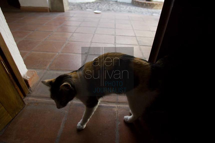 Cat; Antigua, Guatemala.