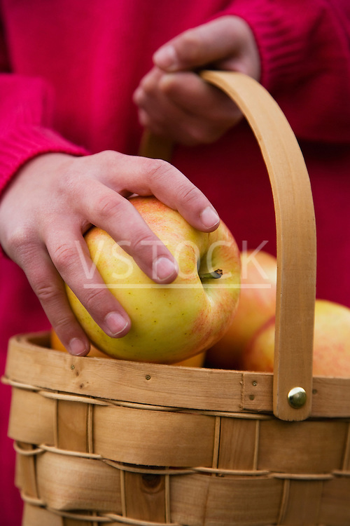 Girl (8-10) collecting apples in basket, close-up