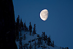 Moon set at dawn next to cliff over trees on snow mountain ridge in early spring above Yosemite Valley, California