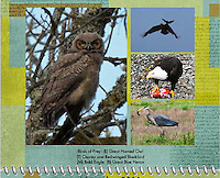 November 2011 Birds of a Feather Calendar