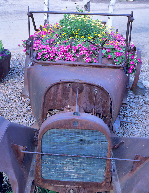 1917 Dodge Brothers truck with flowers. Chena Hot Springs, Alaska
