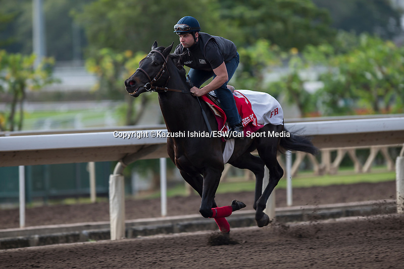 DEC 11,2015: Free Port Lux ,trained by ,Freddy HEad exercises in preparation for the Hong Kong Cup at Sha Tin in New Territories,Hong Kong. Kazushi Ishida/ESW/CSM