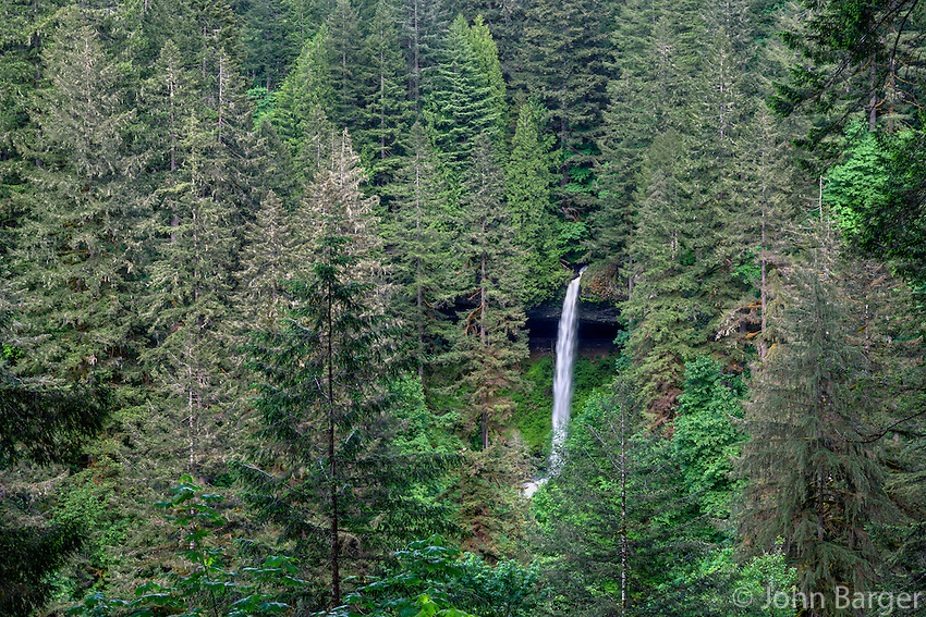 ORSF_D161 - USA, Oregon, Silver Falls State Park, North Falls, which drops 136 feet, and surrounding forest in spring.