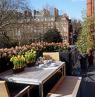 Spring is heralded by the arrival of miniature daffodils and warm sunshine on this terrace overlooking a central London square