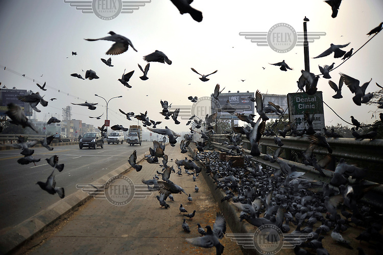 A large flock of pigeons on a fly-over bridge.