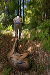 Mountain Lion (Puma concolor) biologist, Sean McCain, dragging road-killed Black-tailed Deer (Odocoileus hemionus) to bait lions, Santa Cruz Puma Project, Santa Cruz Mountains, California