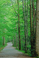 The trail winds through a spring forest in the Elkmont area, Great Smoky Mountains National Park, Tennessee.