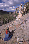 Carolyn Fox photographs an ancient bristlecone pine near Wheeler Peak, Great Basin National Park, Nevada