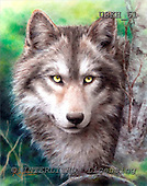Kayomi, REALISTIC ANIMALS, paintings, wulf, ForestWatch_M, USKH61,#A# realistische Tiere, realista, illustrations, pinturas