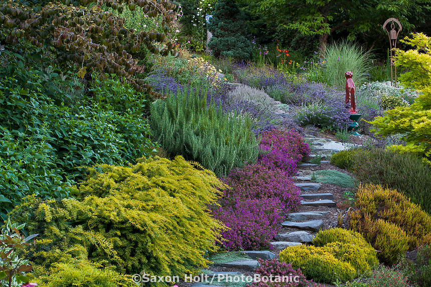 Stepping stone path through drought tolerant summer-dry Northwest hillside garden with rosemary, lavenders, heatherand glazed ceramic cat as focal point; Albers Vista Gardens