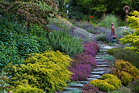 Stepping stone path through drought tolerant summer-dry Northwest hillside garden with rosemary, lavenders, heatherand glazed ceramic cat as focal point; Albers Vista Gardens