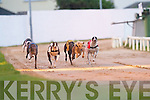 Jeffs Whister (No 1) passes the line in the Kerry Group Hospital Sweepstake Final on Friday night at Kingdom Greyhound Stadium, Tralee, in aid of Kerry General Hospital..