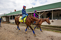 LOUISVILLE, KY - MAY 03: Irish War Cry, owned by Isabelle de Tomaso and trained by H. Graham Motion, walks back to the barn at Churchill Downs on May 03, 2017 in Louisville, Kentucky. (Photo by Alex Evers/Eclipse Sportswire/Getty Images)