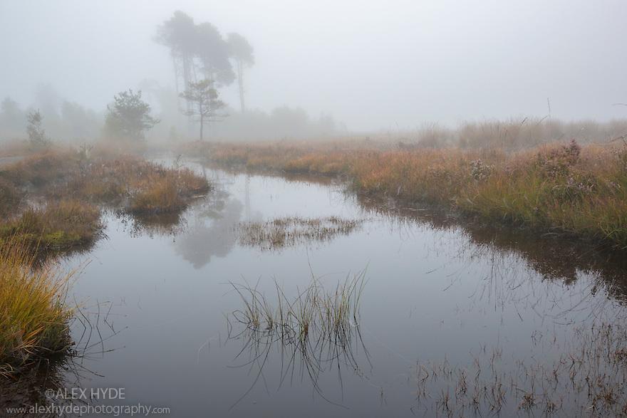 Heathland pool on a misty morning, Thursley Common National Nature Reserve, Surrey, UK. October.