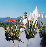 The blooming agaves growing in dedicated roof containers preface the view towards the snow-capped Atlas Mountains in the distance