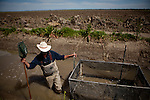 """California Trout's Jacob Katz wades next to a """"live car"""" used to catch and count fish in a rice field on Knaggs Ranch near Woodland, California, March 23, 2013. Research by UC Davis Center for Watershed Sciences, conservation science and advocacy organization California Trout, and the California Department of Water Resources shows that salmon raised in a floodplain have higher growth rates than those in a river or hatchery."""