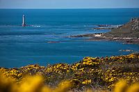 Europe/France/Basse-Normandie/50/Manche/Presqu'Ile du Cotentin/Cap de la Hague/Auderville: Le Phare de la Hague sur le rocher: Le Gros du Raz veille sur le courant du Raz Blanchard devant le petit port de Goury