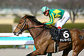 Horse Racing in Hyogo