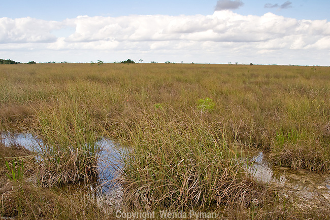 The Shark River Slough is the principal natural drainage for the freshwater Everglades.