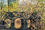 Stone footbridge on the Muddy River in the Back Bay Fens, Boston, Massachusetts, USA