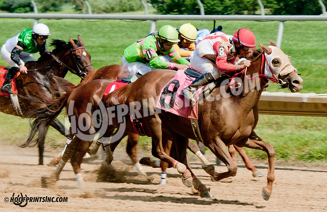 Regal Nurse winning at Delaware Park on 7/15/13