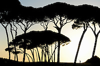 ITALY Tuscany, Baratti, umbrella pine trees at Golfo di Baratti / ITALIEN, Toskana, Baratti bei Piombino, Schirmkiefer am Golf von Baratti