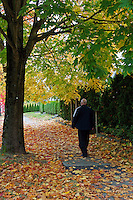 Man walking below autumn trees, Vancouver, BC, Canada