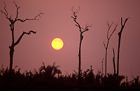 Burned trees in Amazon rainforest, land clearance for livestock.
