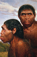 World Civilization:  Hominid Ancestors--Homo Erectus, 1 M. B.C.  Reconstruction from skull fragments found in Indonesia. Homo Erectus was first to leave Africa and to use fire.