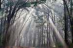 Sunlight streaming through trees, Corbett National Park, Uttarakhand, Oldest National Park in India, named after Jim Corbett hunter turned conservationist, forest woodland, Northern India.India....